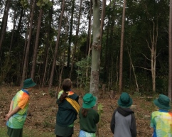 Harmony Forest Planting 7 December 2015